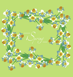 frame white daffodils spring vector image