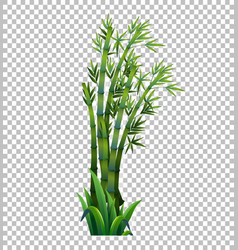 Green bamboo tree on transparent background vector