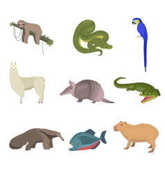 set of wild south america animals parrot and fish vector image