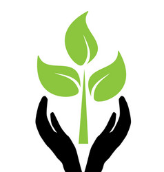 hands holding tree vector image vector image
