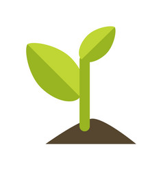 young green sprout from the ground vector image