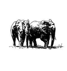 Hand drawn sketch of elephant black on vector