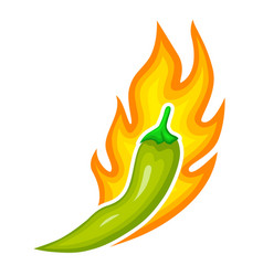 hot finger pepper with sharp taste green chili is vector image