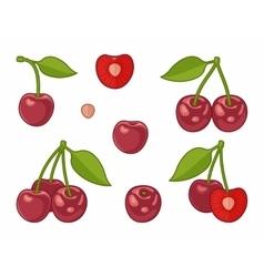 Image cherries vector