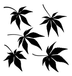 Maple leaves pictogram set vector