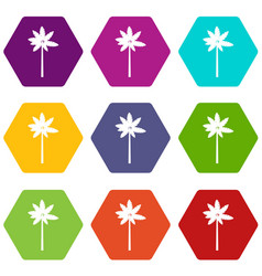 Palm woody plant icon set color hexahedron vector