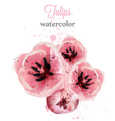 pink tulips watercolor card delicate vector image