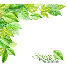 spring leaves watercolor angular vector image
