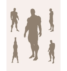 The set of 5 body building silhouette vector