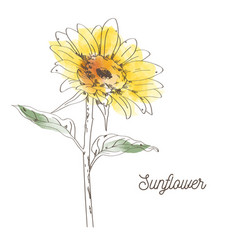 yellow sunflower design on white background vector image