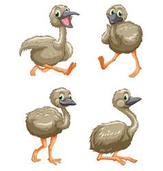 Emu ostrich series vector image