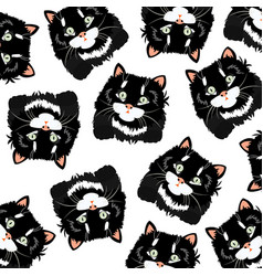 black cats on white background vector image