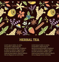 herbal tea banner vector image