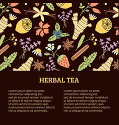 herbal tea banner vector image