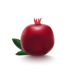 realistic detailed 3d whole pomegranate with half vector image