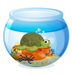 a water bowl and a tortoise vector image vector image