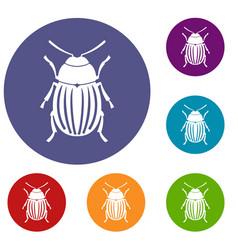 Colorado potato beetle icons set vector