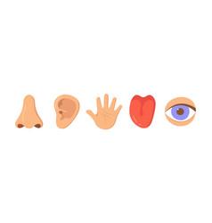 Five human senses organ set nose ear hand vector