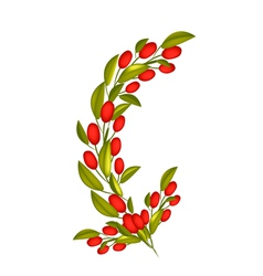 Red Ripe Olives on A Branch on White Background vector image vector image