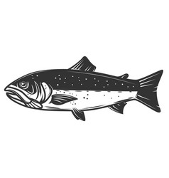 salmon isolated on white background fishing vector image vector image