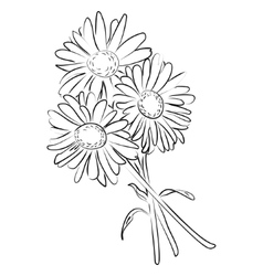 An ink sketch of camomile flower vector