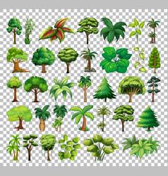 Set tree on transparent background vector