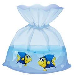 A plastic bag with two fishes vector image