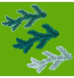 A set of blue spruce branches Christmas tree - a vector