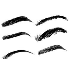 Detailed eyebrows set vector