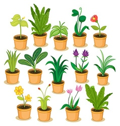 Potted plants and flowers vector
