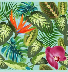 Tropical leaves of palm trees dieffenbachia vector