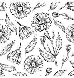 Calendula seamless pattern isolated medica vector