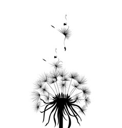 Metaphors nature dandelion vector
