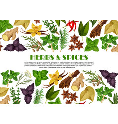 Spices and herbs farm store poster design vector