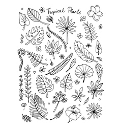 Tropical plants sketch for your design vector