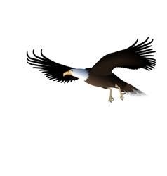 Flying Eagle Isolated on White Background vector image