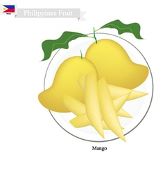 Fresh Mango A Famous Fruit in Philippines vector image