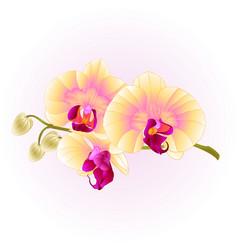 beautiful phalaenopsis orchid yellow stem vector image