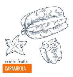 carambola hand drawn vector image