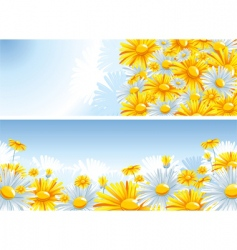 beautiful background with a chamomile vector image