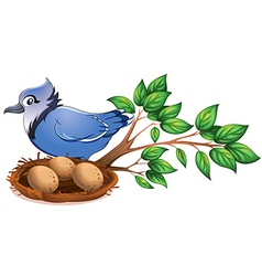 A blue bird at the branch of a tree with a nest vector image