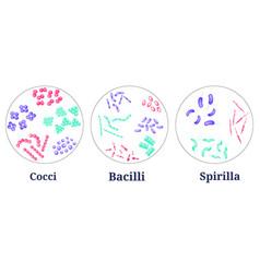 Arrangements of bacteria in petri dish vector