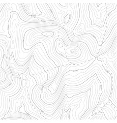 background topographic line contour map vector image