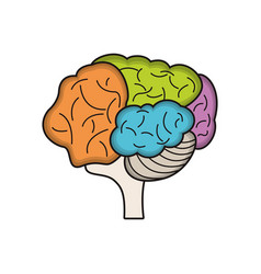 colo brain idea innovation vector image