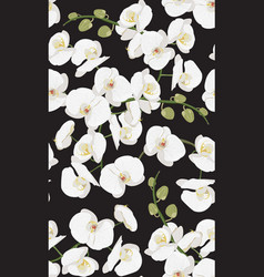 White orchid floral seamless pattern flowers vector