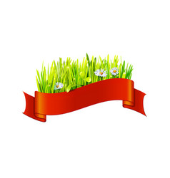 grass and chamomiles in red ribbon vector image