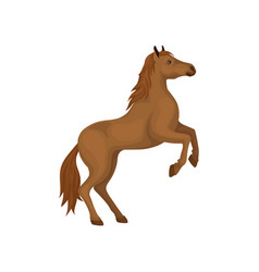 Brown horse rearing up animal with hooves vector