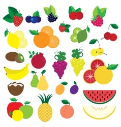 Colorful fruits and berries vector image