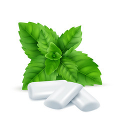 Mint gum fresh menthol leaves with white gum vector