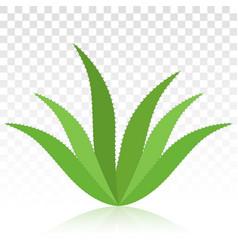 Bio herbal green aloe vera plant flat icon vector